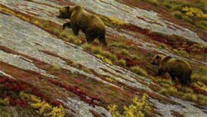 Robert Bateman Alaskan Autumn